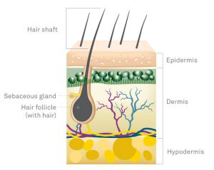 Scientific image of human hair