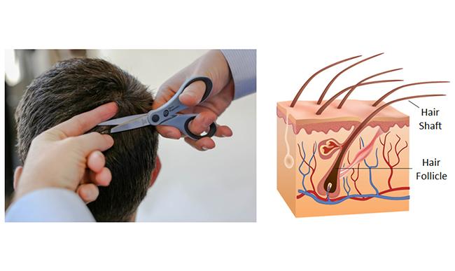 hair testing: