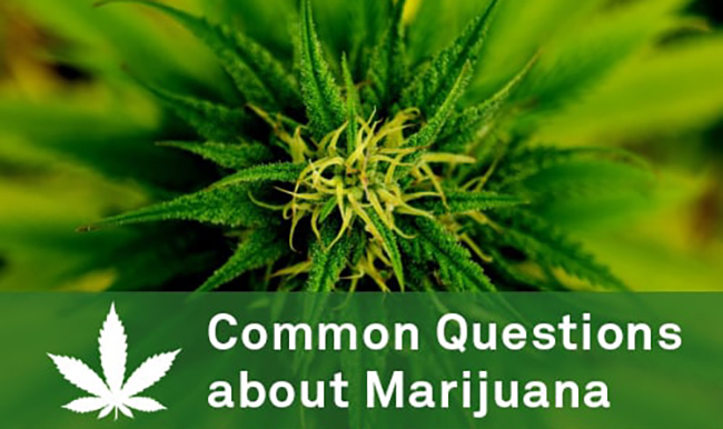 common questions about marijuana