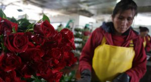 red roses at a floral market